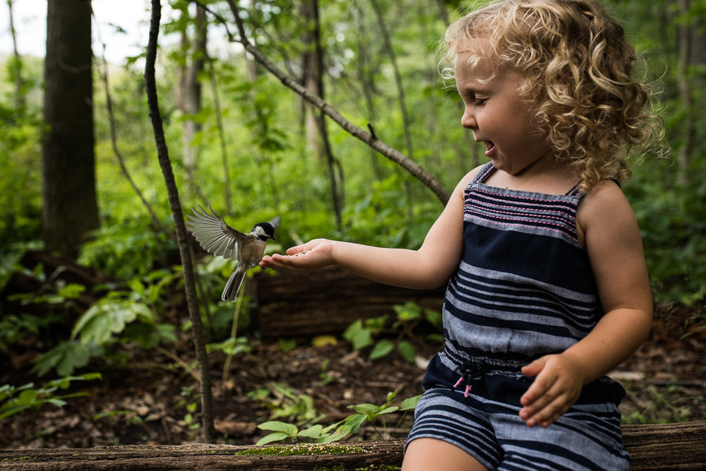 Toddler girl in a blue and pink stripped romper sitting on a log and holding out a hand filled with bird seed and a small white and black bird landing on her hand to eat the seed surrounded by green trees in the woods of Cherry Hill Gate trail in Burlington