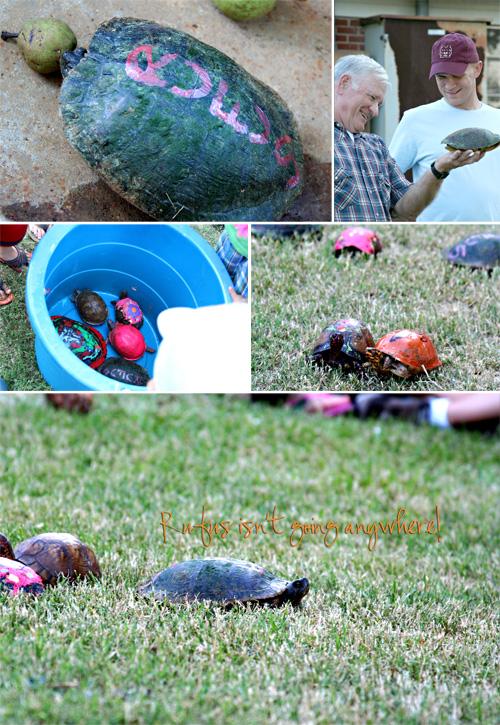 turtle-race-2010