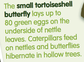 Whose eggs? Easter family forest fun #weloveforests