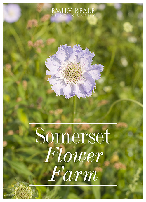 Somerset Flower Farm » Emily Beale Photography