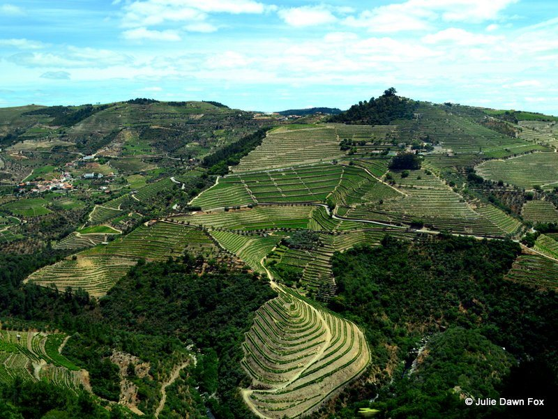 How and when to explore the Douro valley wine region in Portugal