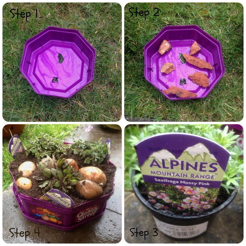 Quality Street alpine mini garden