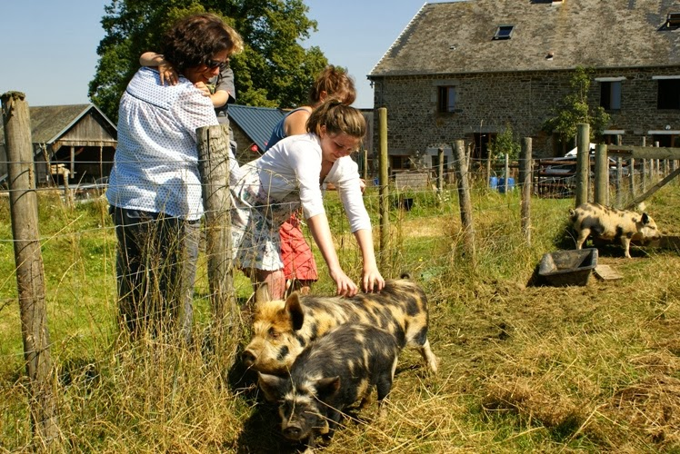 14 things to do at Eco-Gites of Lenault in 2014