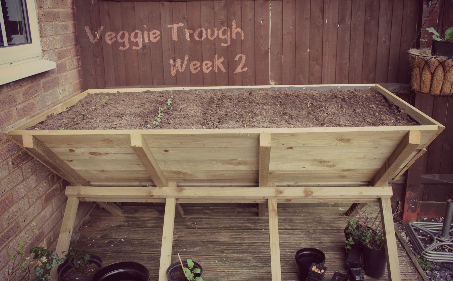 Vegetable Trough Challenge - Vegetables starting to grow