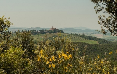 An Italian Wine To Discover: Brunello Di Montalcino