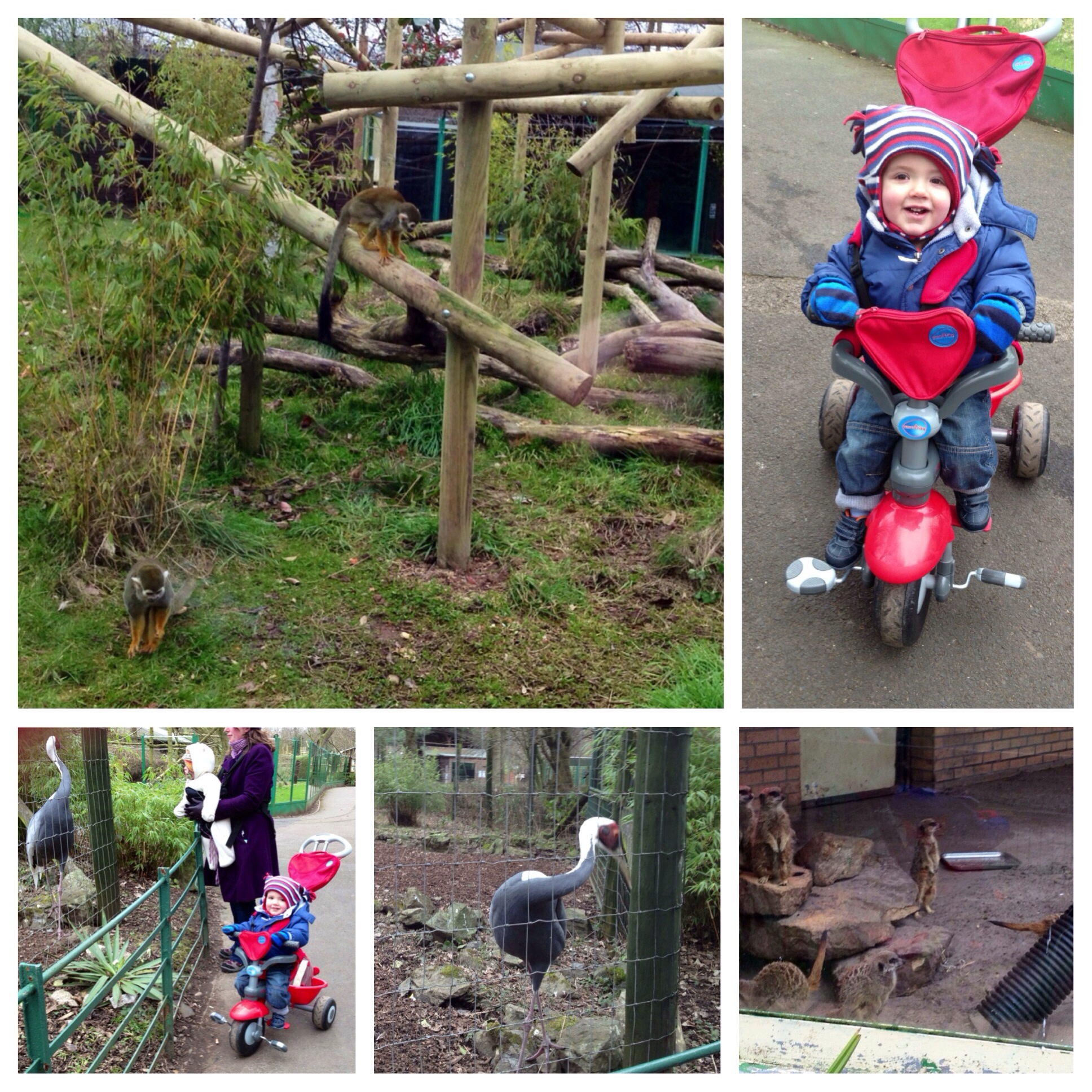 Country Kids (W/E 23rd February 2013) – Monkeying Around!!