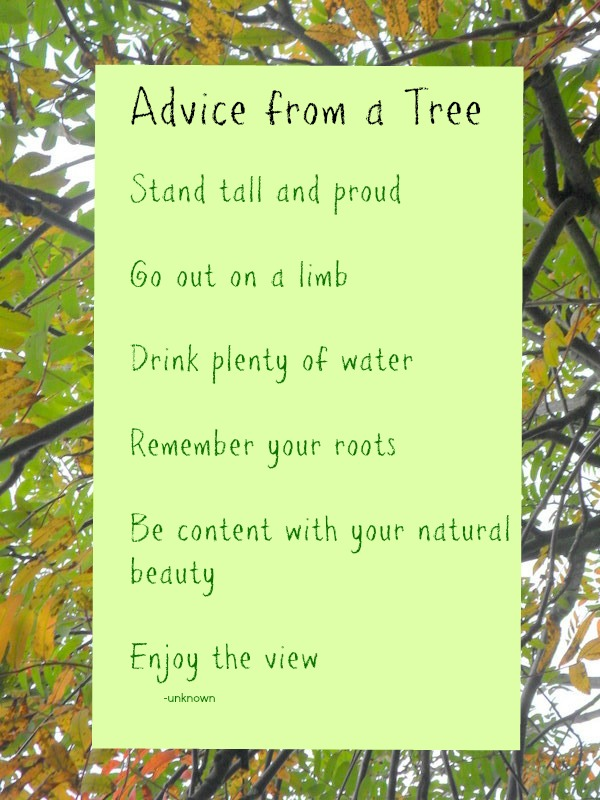 Advice from a Tree – Sunday Inspiration
