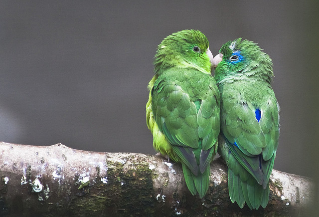 Happy Valentine's Day! A Loving Look atLovebirds