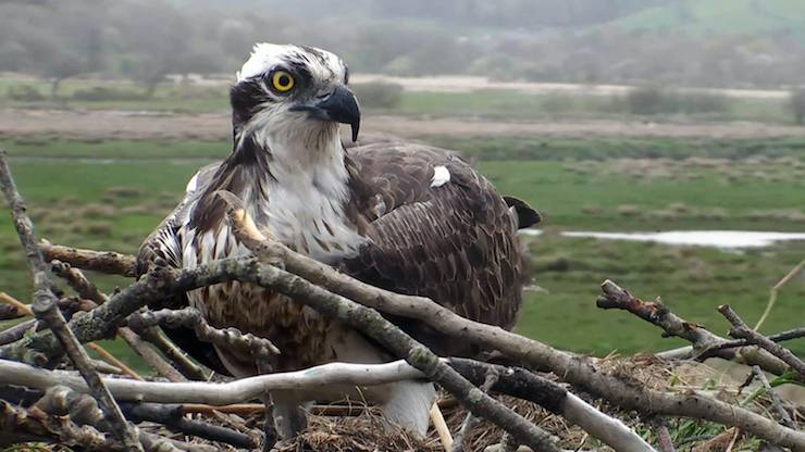 Dyfi Osprey Project, Snowdonia - Mums do travel