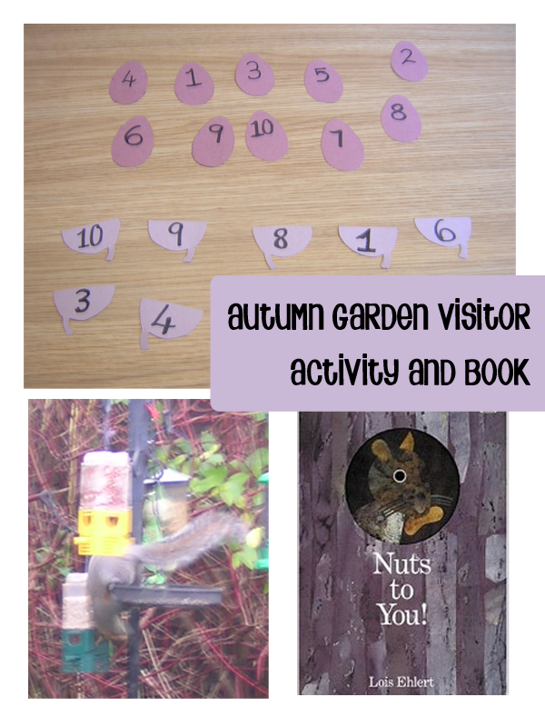 Squirrel Activity for Autumn visitors to the garden