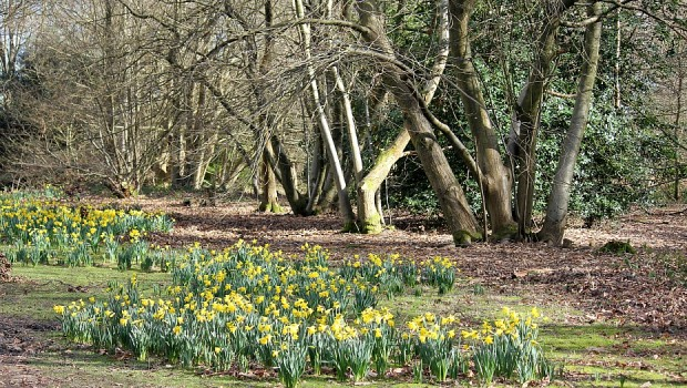 Spring at Winkworth Arboretum