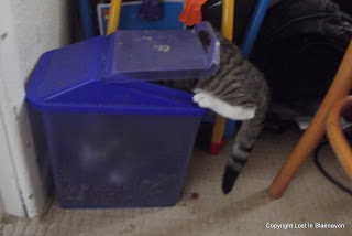 The Funny Things That Cats Do!