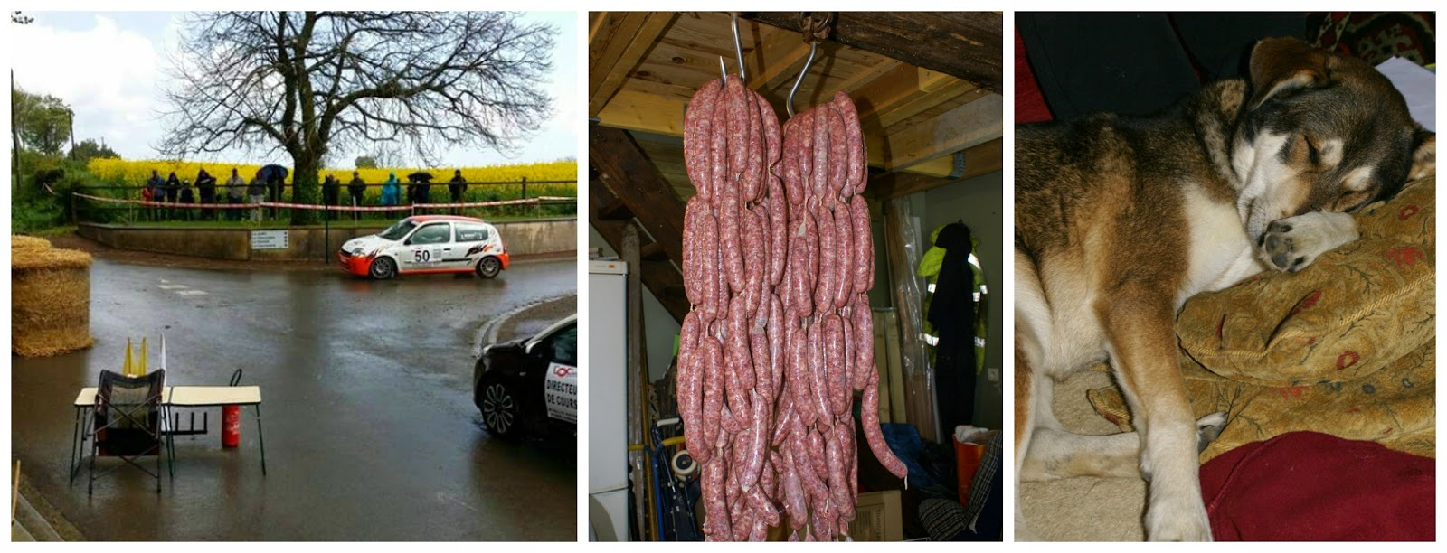Cars, pigs and a bad few days for the dog!