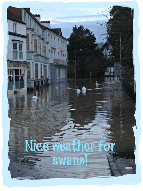 Nice weather for swans!