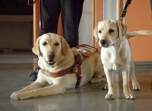 Assistance and Companion Dogs