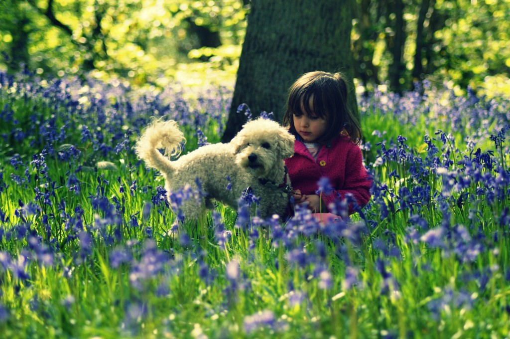Our Magical Bluebell Wood Adventure - twinstiarasandtantrums.com