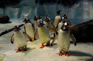 Penguin Ice Adventure - Sea Life Centre Birmingham - twinstiarasandtantrums.com
