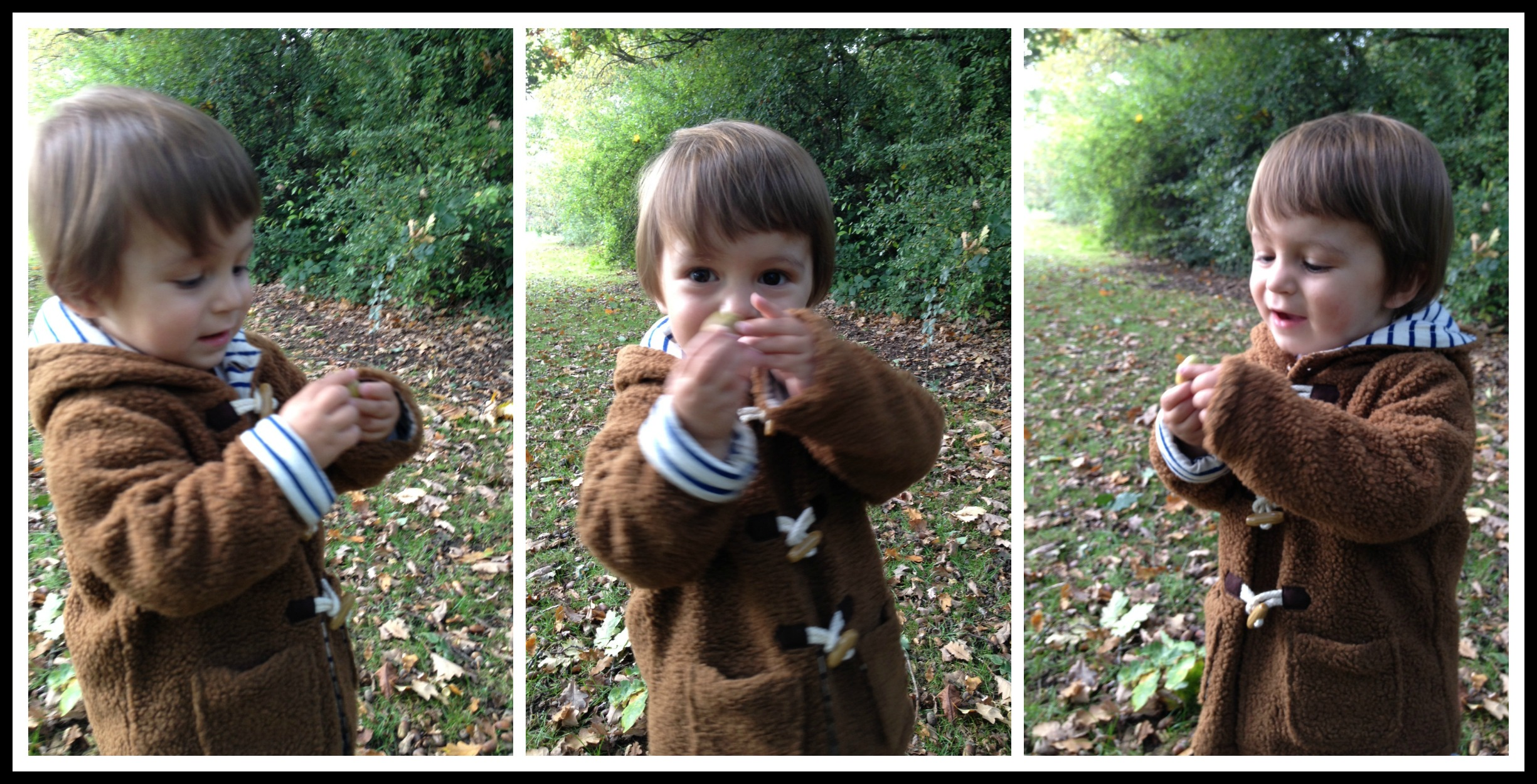 Acorns - our autumn obsession