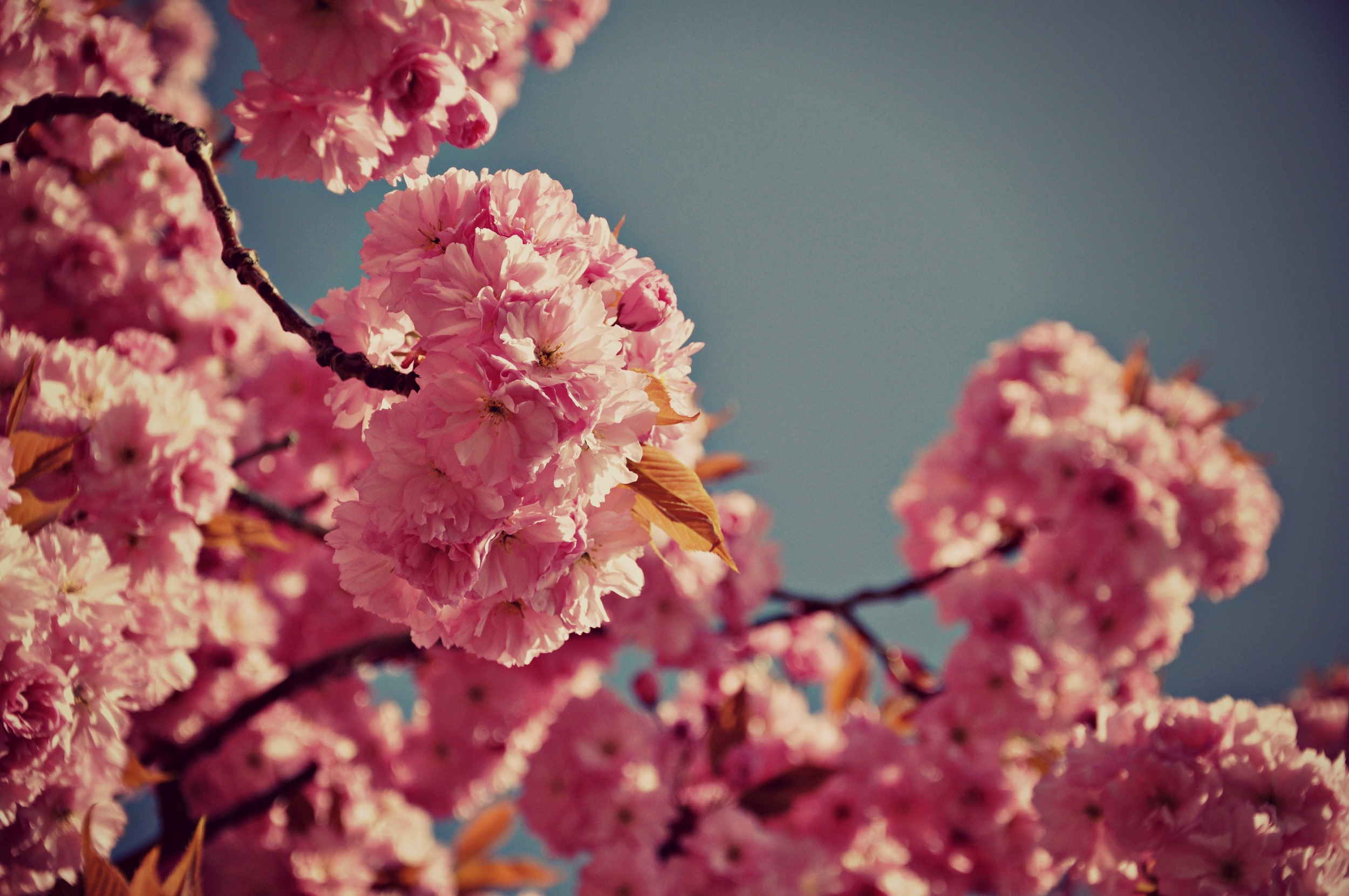 Blossoming