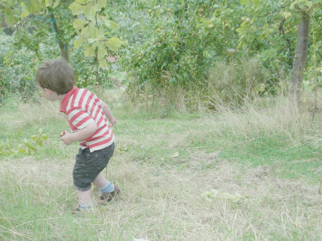Fruit Picking in Southend