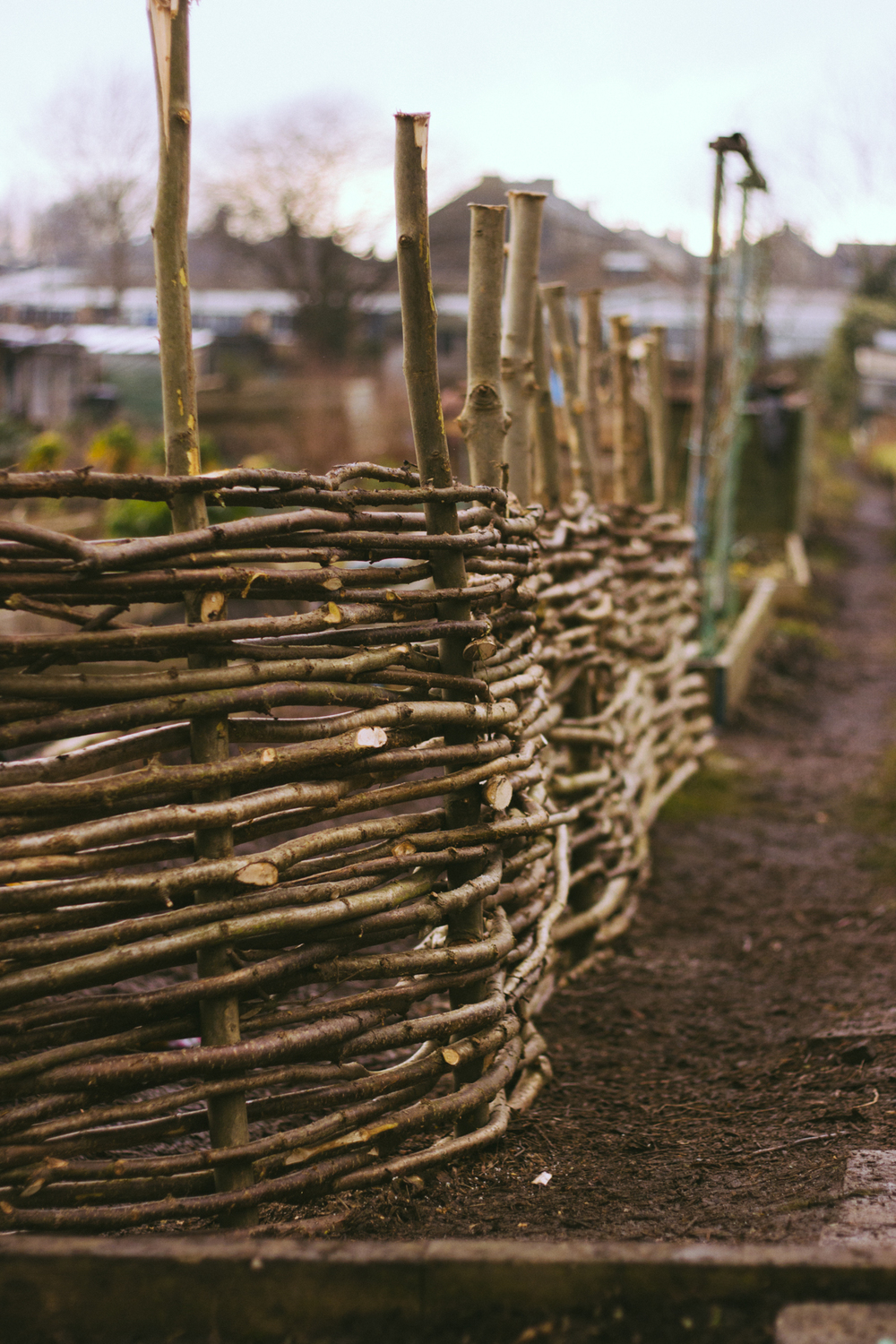 Weaving a hazel fence