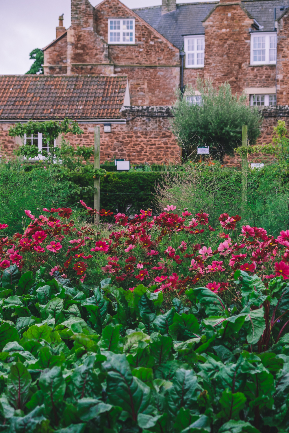 The Walled Gardens of Cannington, Somerset