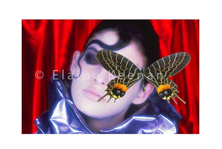 M. Papilionidae
