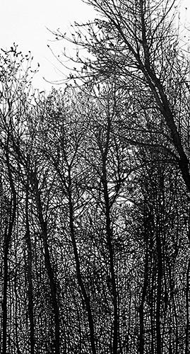 Raymond DeCicco  Oconee Winter II , 2011 aluminum plate lithograph 30 x 16 inches