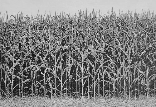 Michael Rausch  Cornfield , 2011 etching 20 x 24 inches