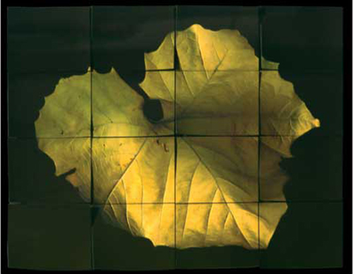 Dawn Dedeaux   Maple Leaf #3 , 2005 enhanced digital image