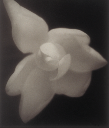 David Nester   Diana Magnolia #42 , 1996 platinum palladium print Courtesy of the artist