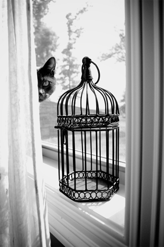 Cassie Hodge   Empty Cage , 2010 digital photo