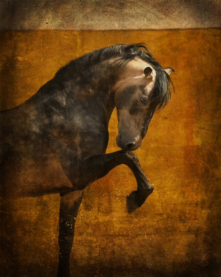 Kimberly Boyd Vickrey   Stallion in Red , 2011 metallic print
