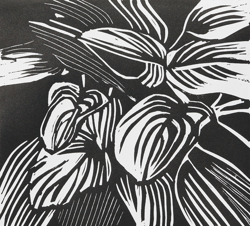 Sandra Steed   Hosta Leaves , 2017 linocut 7.5 x 8.5 inches