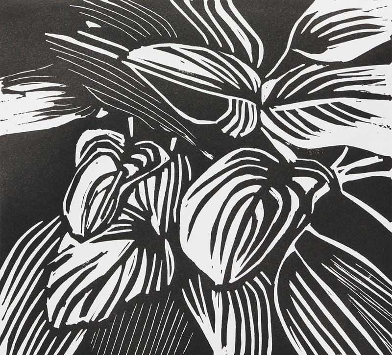 Sandra Steed   Hosta Leaves , 2017 linocut 7.5 x 8.5 inches