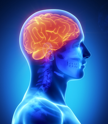 2. The Anatomy of a Concussion, How I Got Mine, and the Denial I ...