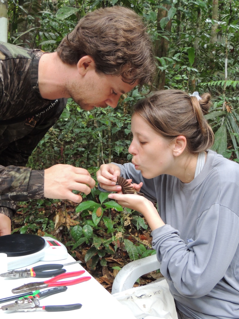 Erik Johnson and Maíra Rizzi checking for wing molt at the banding station.