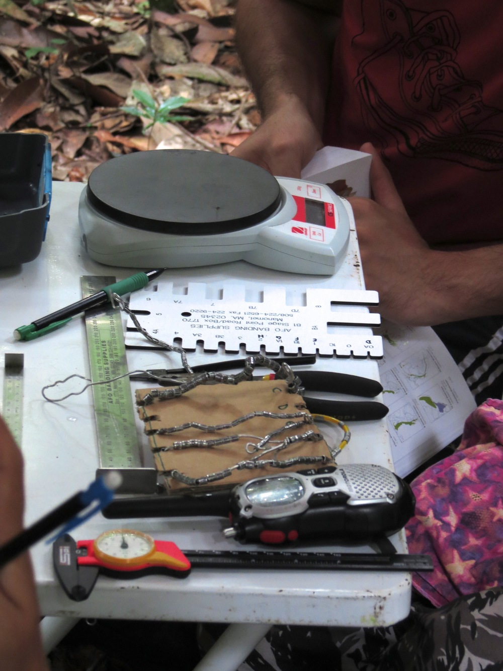 Banding station table with scales, calipers, bands, pliers and radio (Photo by Humberto Mohr).