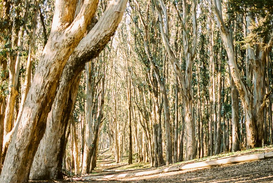 wood-line-1