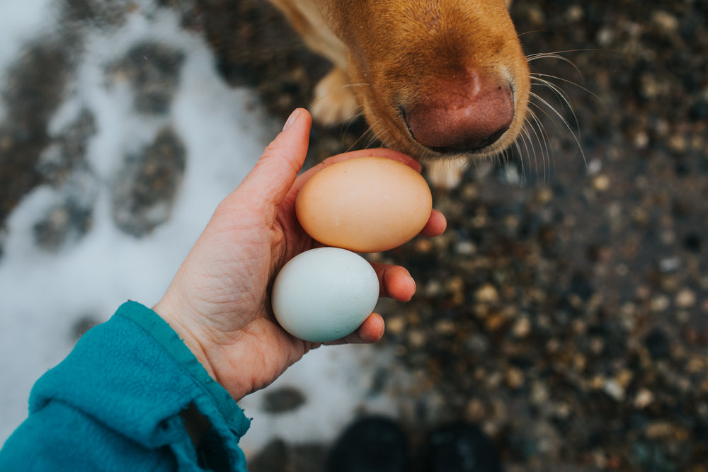 I love the colors of these eggs. And Waylon loves the taste ;)