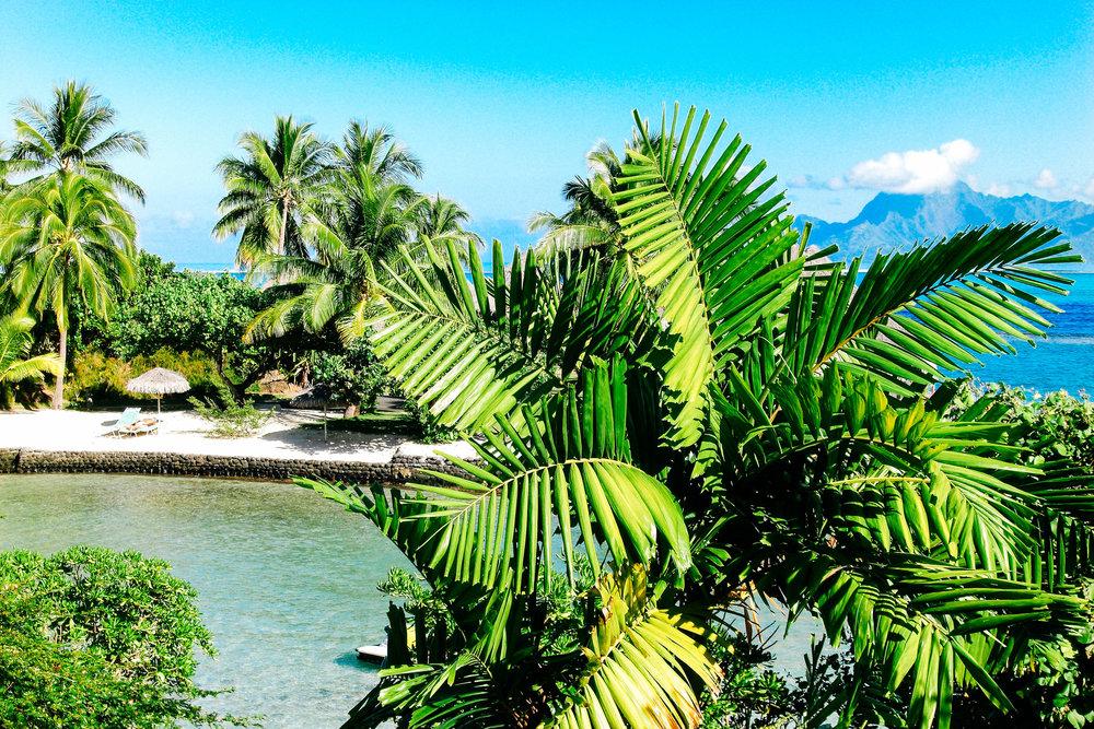 Tahiti via taylorkristiina.com