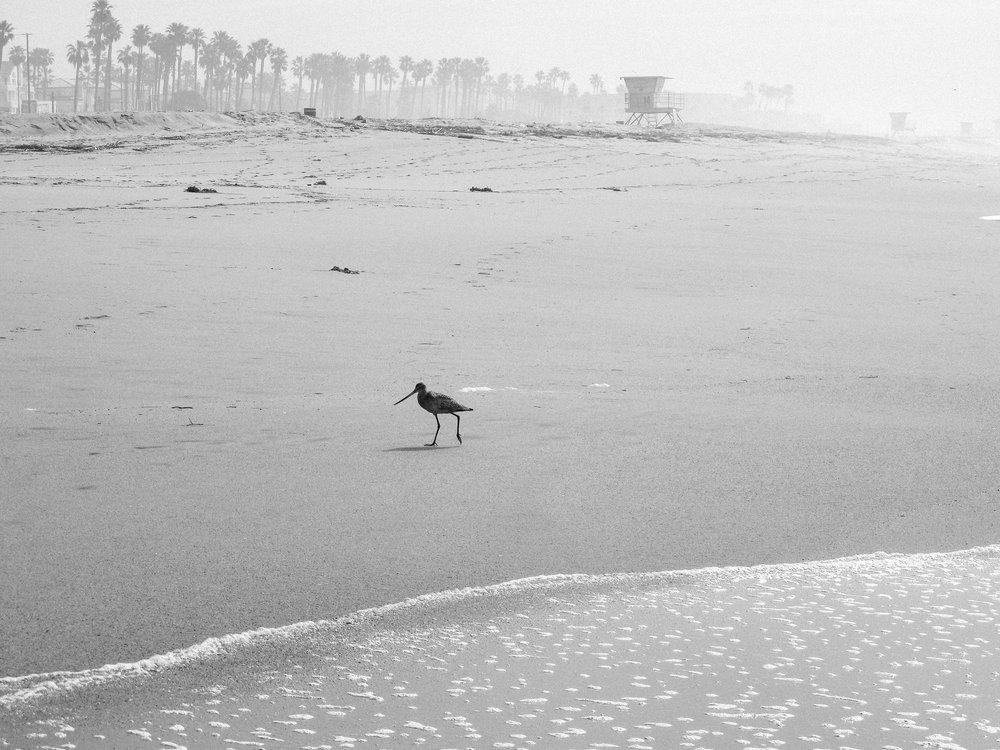 Huntington Beach, CA.