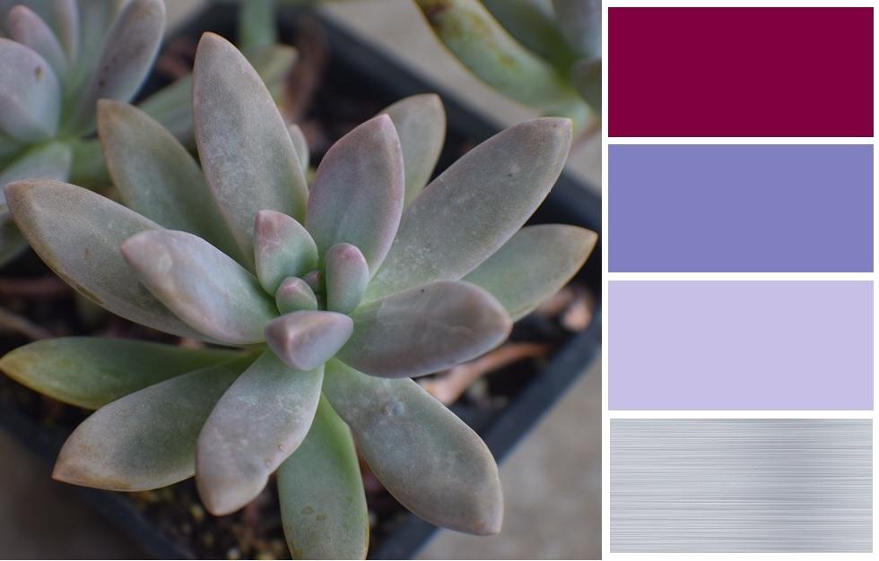 Blue Pearl Succulent Color Palette