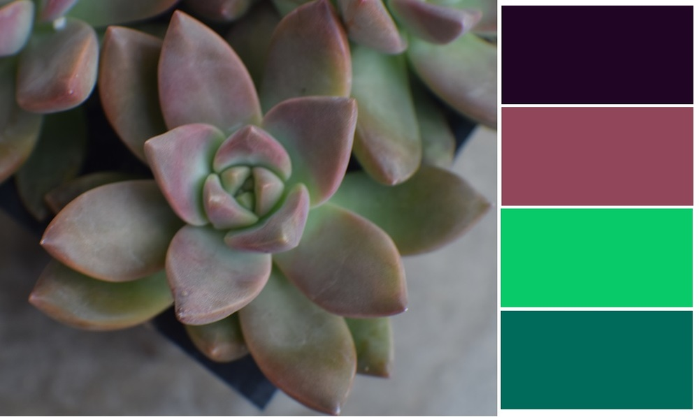 California Sunset Succulent Color Palette