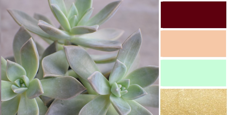 Graptopetalum Succulent Color Palette