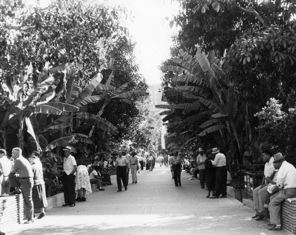 The dense flora of Pershing Square, pictured here in 1956, provided shade for park-goers and privacy for men cruising for sex. In 1994, the city demolished and redesigned the park, stripping it of most its plant life.  Courtesy of the Los Angeles Public Library Photo Collection