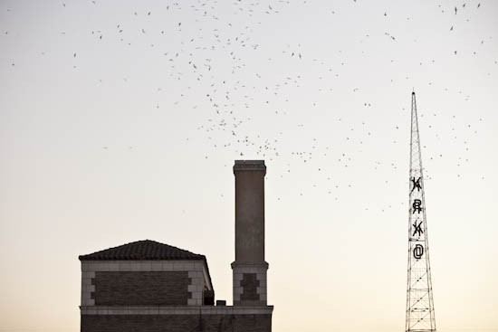 A brick chimney in the Historic Core was for several years a temporary home for Vaux's swifts. (image via  LA Weekly )