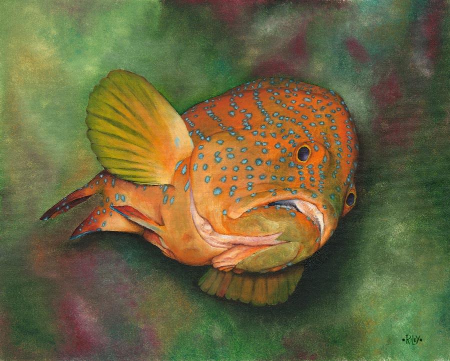 Coral Grouper.jpg