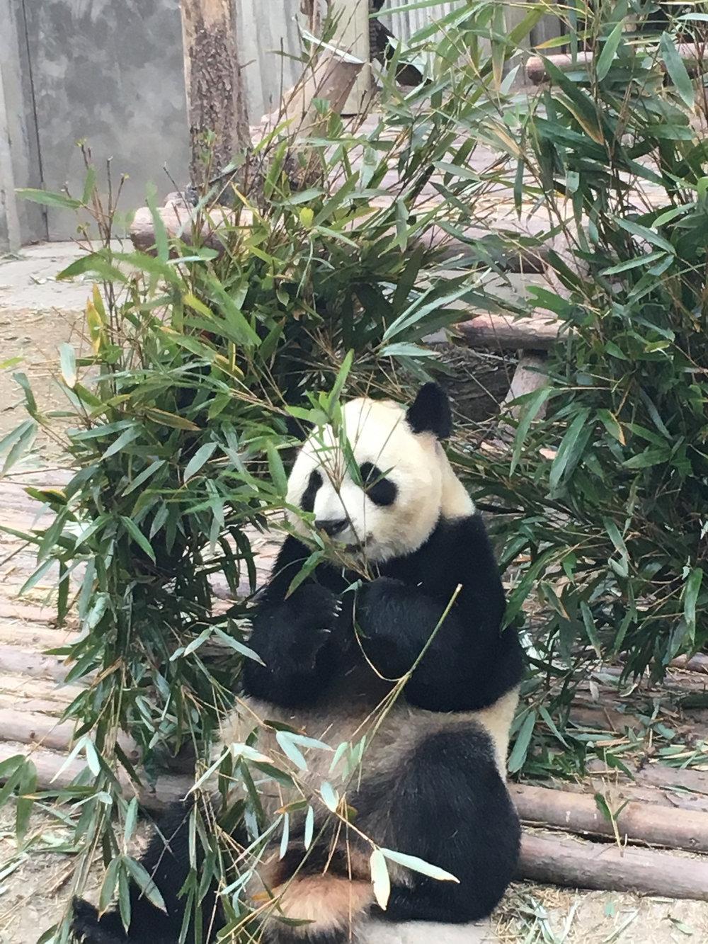 Panda - 1 (2)(2).jpg