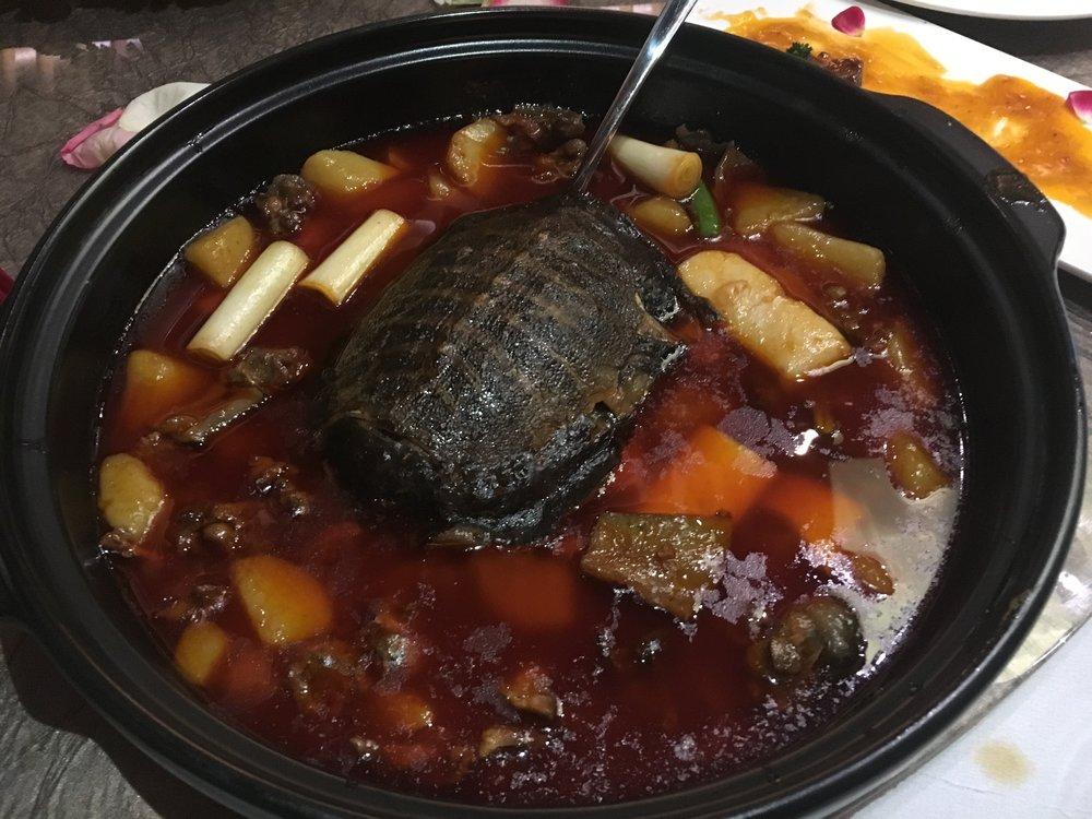 turtle - 1.jpg